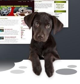 Erstellen Sie eine Website für Ihr Tier und teilen Sie neben Bildern auch die Erfahrungen und besten Adressen für Tiernahrung.